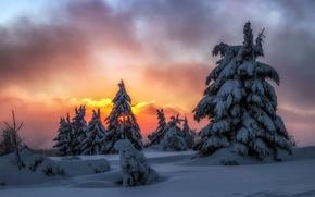 Wallpaper winter, snow, night, tree