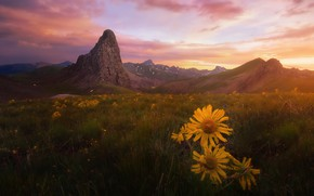 Wallpaper field, summer, the sky, grass, clouds, light, sunset, flowers, mountains, mood, hills, tops, dal, the ...