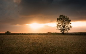 Picture field, tree, the evening