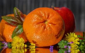 Picture flowers, orange, citrus