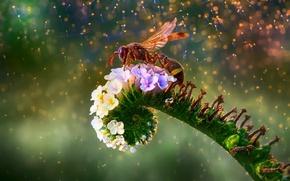 Wallpaper OSA, flower, bokeh, macro, flowers