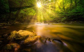 Picture forest, water, the sun, trees, river
