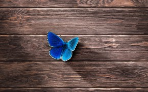 Picture tree, butterfly, minimalism, wooden Wallpaper
