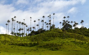 Picture greens, the sky, grass, clouds, trees, tropics, palm trees, hills, the bushes, Colombia