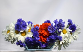 Picture flowers, holiday, bouquet, flag, Russia, the day of Russia