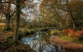Wallpaper nature, trees, autumn, lake