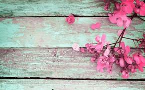 Picture flowers, spring, pink, vintage, wood, pink, flowers, spring