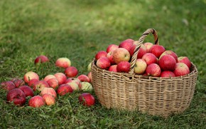 Picture grass, basket, apples