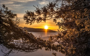 Picture forest, lake, dawn, morning, Sweden, Sweden