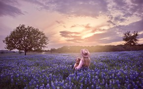 Picture field, the sky, trees, sunset, flowers, dog, hat, girl, lupins