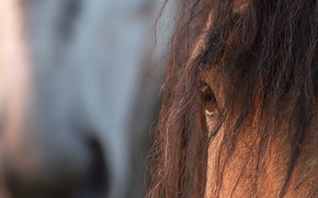 Picture eyes, background, horse