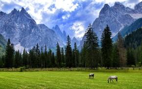 Picture field, landscape, mountains, tops, horses, horse, pasture, grazing