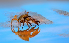 Picture sand, water, crab