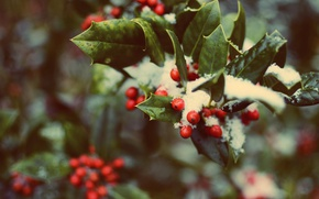 Picture forest, leaves, snow, red, green, berries, tree, Christmas, Christmas, Holly, Holly, holly, the druids