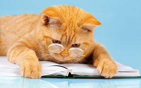 Wallpaper cat, humor, reads, glasses, smart, book, red, background, paws, lies