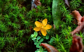 Picture Spring, Spring, Yellow flower, Yellow flower