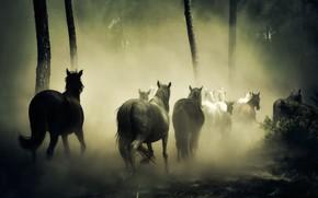 Wallpaper forest, fog, horses, horse, gallop, the herd