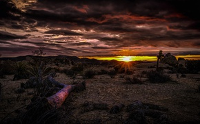 Picture clouds, sunset, desert, CA, glow, USA, National Park Joshua tree