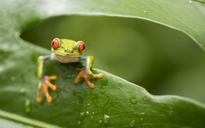 Picture sheet, frog, Nature, hole, looks