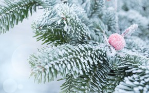Picture winter, snow, branches, tree, frost, winter, snow, fir tree