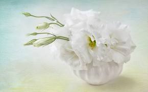 Picture background, Flowers, Flower, background, eustoma, Floral