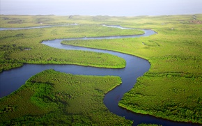 Picture greens, nature, river, thickets, the view from the top, Delta, from the height of bird ...