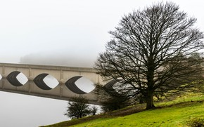 Picture bridge, fog, tree, arch