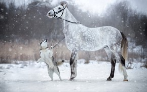 Picture winter, snow, horse, dog, bridle