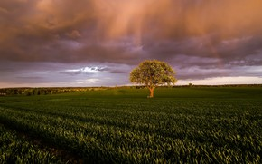 Picture field, light, clouds, nature, tree, morning