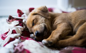 Picture sleep, cute, puppy