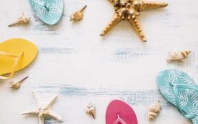 Picture beach, summer, star, shell, summer, beach, wood, slates, starfish, seashells