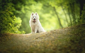 Picture nature, dog, puppy, bokeh