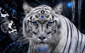 Picture white, tiger, stone, mystic