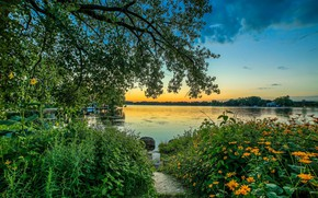 Picture flowers, morning, trees, lake, nature