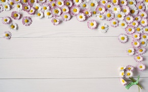 Picture background, Board, summer, flower, pink, Daisy