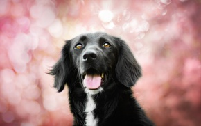 Picture dog, bokeh, Spring colors