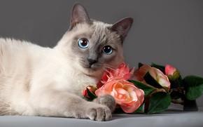 Picture cat, cat, look, flowers, animal, roses, Anna Verzina, Anna Varzina