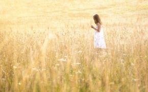 Picture field, summer, light, girl