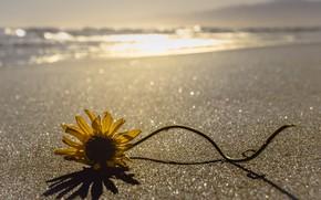 Picture sea, flower, shore
