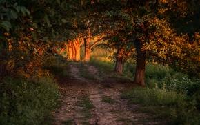 Wallpaper road, trees, sunlight