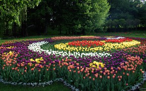 Picture beauty, tulips, exhibition