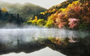 Picture trees, nature, fog, lake, spring, haze, South Korea, South Korea, Jeollanam-do, Jeollanam-do, The Republic of ...