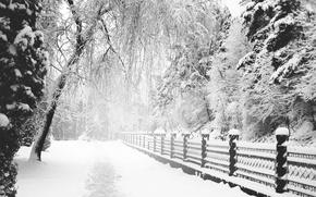 Wallpaper Park, monochrome, Winter, Park, Trail, Snow, Winter, Path, Snow