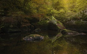 Picture autumn, forest, water, trees