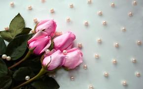 Wallpaper summer, love, flowers, bright, green, barbed, pink, gentle, tenderness, rose, roses, bouquet, petals, Bud, pearl, ...