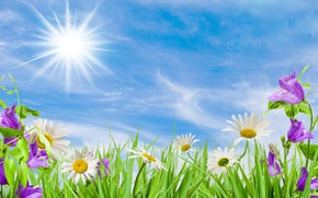 Picture the sky, the sun, flowers