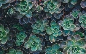 Picture Macro, Nature, Background, Plants