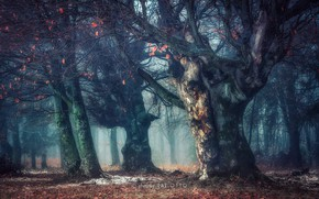 Wallpaper forest, nature, fog