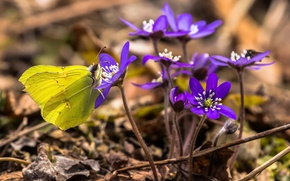 Picture flowers, butterfly, spring, pechenocna
