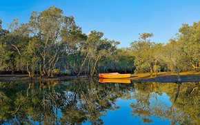 Picture forest, the sky, water, the sun, trees, Park, reflection, river, treatment, boats, Australia, Brooklyn, Hawkesbury …